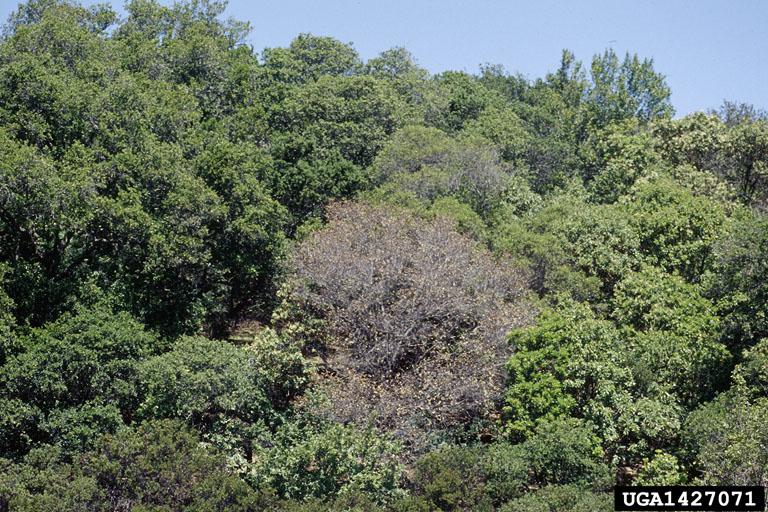 Sudden Oak Emerging Threats